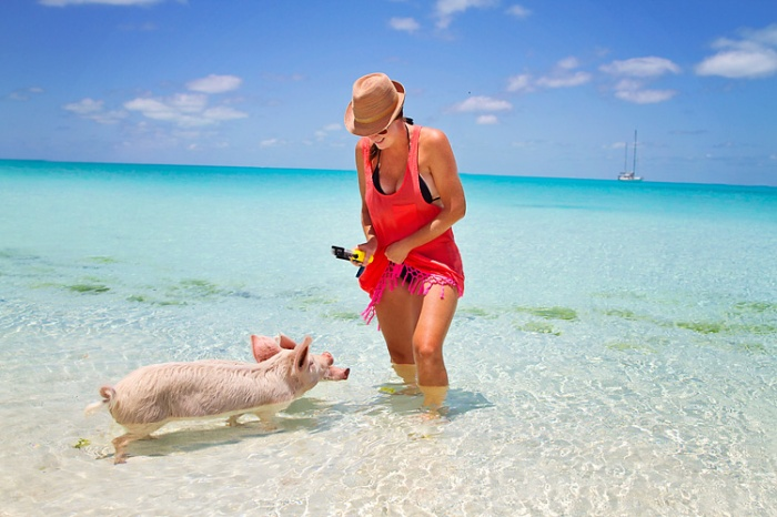 sailing-blog-cruising-bahamas-caribbean-exumas-big-major-spot-staniel-cay-pig-beach-swim-with-the-pigs-lahowind-eimg_4248